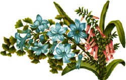 blue-pink-flowers