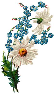 daisies-1