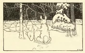 rabbits-18