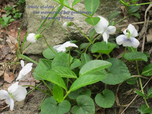 HAIGA - white violets copy