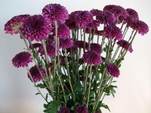 PurpleFlowers 008