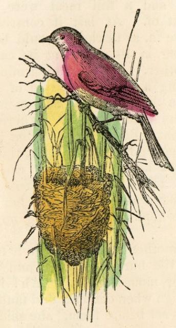 bird-nests-12