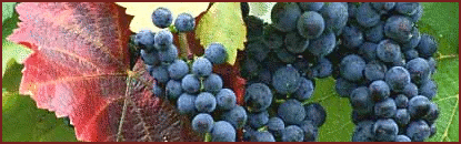 grapes_banner